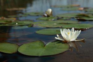 Spiritueel therapeut Den Bosch